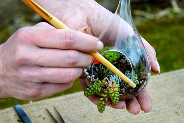 Lovely Greens is teaming up with Ashley from The Bees Knees to offer a creative gardening workshop where you get to make and take home TWO succulent terrariums #succulentterrarium #isleofman #creativeworkshop