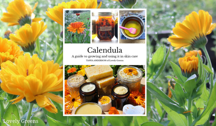 calendula-ebook-cover-1-750x440